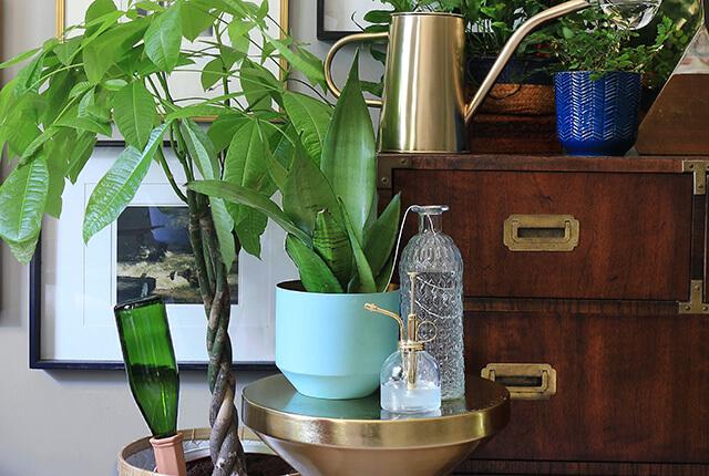 keep plants watered